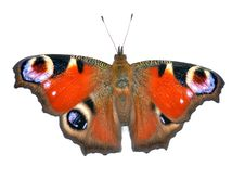 Free Butterfly Stock Photography - 20615092