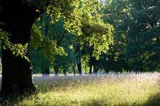 Free Evening Sun Stock Photography - 20615312