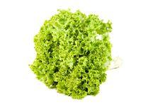 Free Green Salad Royalty Free Stock Photo - 20617185