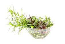 Free Green Herbs Royalty Free Stock Image - 20617196
