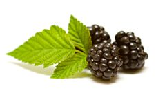 Free Blackberries Stock Photos - 20617203