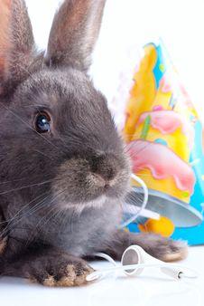 Free Bunnies Royalty Free Stock Photo - 20617355