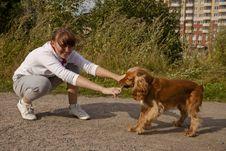 Free Dog Exercise Stock Image - 20617671