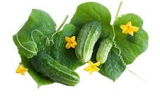 Free Green Cucumber With Leaves Isolated On White Royalty Free Stock Photo - 20618185