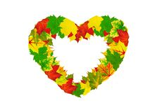 Heart Shape Made By Maple Autumn Leaves Stock Image