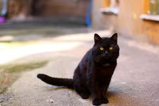 Free Cat Stock Image - 20618411