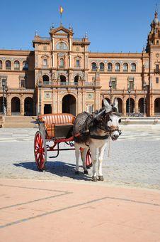 Free Horse Drawn Carriage Tour Donkey At Plaza De Espan Royalty Free Stock Photos - 20618708