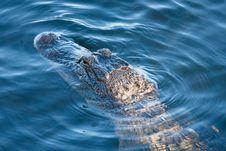 Free Aligator S Head Royalty Free Stock Photo - 20618815