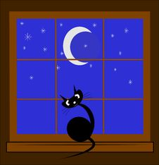 Free Cat In Window At Night Stock Photography - 20618952