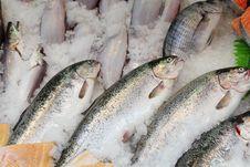 Free Fish Stock Photography - 20619342