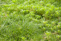 Free Green Weed Stock Photos - 20623833