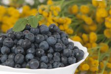 Free Bilberries Royalty Free Stock Images - 20620269