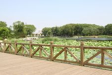 Free Lotus Pond And Bridge In A Park Royalty Free Stock Photo - 20620355