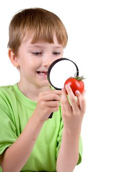 Boy Examines A Tomato With A Magnifying Glass Stock Photography