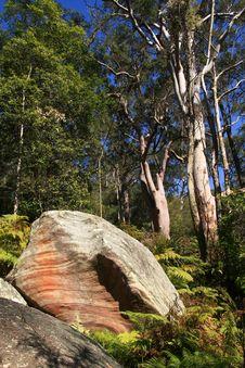 Australian Bush With Rocks And Eucalyptus Trees. Stock Image