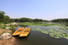 Free Lotus Pond Scenery In A Park Stock Images - 20620594