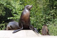 Free Sea Lion Royalty Free Stock Photography - 20621357