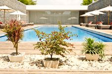 Free Tree Garden With Swimming Pool Royalty Free Stock Photo - 20621545