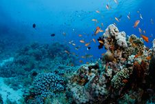 Free Beautiful Coral Reef With Anthias Stock Images - 20622334