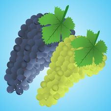 Free Grapes Stock Image - 20622951
