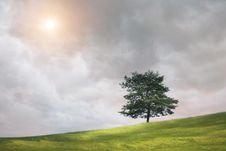 Free Tree And Cloudy Sky Stock Images - 20622954