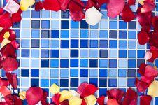 Free Rose Petals Royalty Free Stock Image - 20623036