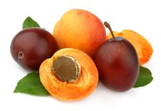 Free Apricot And Plums Royalty Free Stock Images - 20625049
