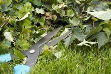 Free Cutting The Ivy Royalty Free Stock Photos - 20625708