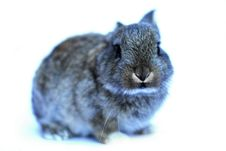 Litte Bunny Stock Photography