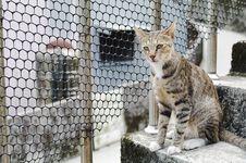 Free Cat Royalty Free Stock Photo - 20627195