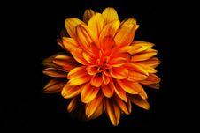 Free Decorative Sunflower - Helianthus Stock Photography - 20627552