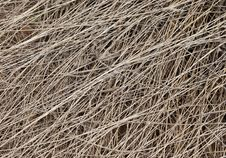 Free Dead Grass Texture Royalty Free Stock Photography - 20628257