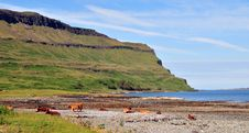 Free Cows On The Beach At Loch Beg Stock Photo - 20628320