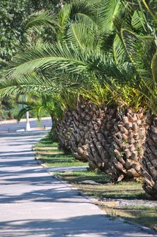 Free Palm Tree Stock Photography - 20633152