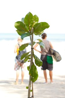 Free New Tree On The Beach Stock Photography - 20635652
