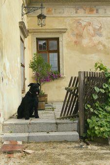 Free Schnauzer Dog Sitting At The House Royalty Free Stock Photo - 20636225
