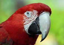 Close Up Parrot Stock Photo