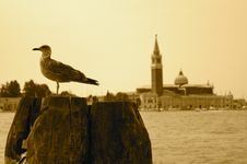 Free Gull In Venice Royalty Free Stock Image - 20639336