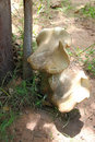 Free Rhinoceros Foot Mushroom Stock Photo - 20648190