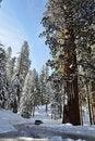Free Winter Road Royalty Free Stock Photos - 20648238