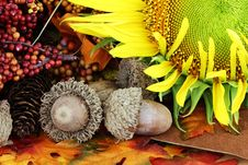 Free Autumn Still Life Royalty Free Stock Photography - 20640417
