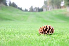 Free Single Bump On Grass Stock Photography - 20641082