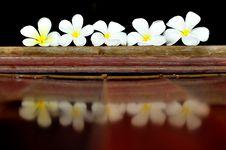 Free Plumeria Royalty Free Stock Photography - 20642227