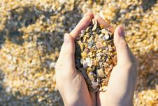 Free Sand And Shells Stock Photo - 20644030