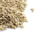 Free Sunflower Seeds Royalty Free Stock Photography - 20644617
