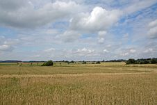 Landscape With Typical Golden Wheat Royalty Free Stock Image