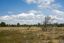 Landscape On Romo, Denmark Royalty Free Stock Image