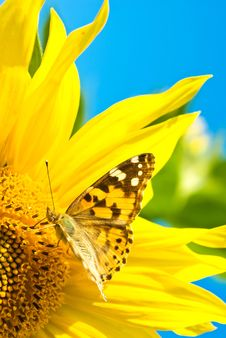 Free Butterfly Stock Images - 20645174