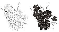 Free Vine Silhouette Stock Image - 20645251