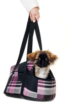 Free Puppy Dog In Bag Stock Photo - 20646650
